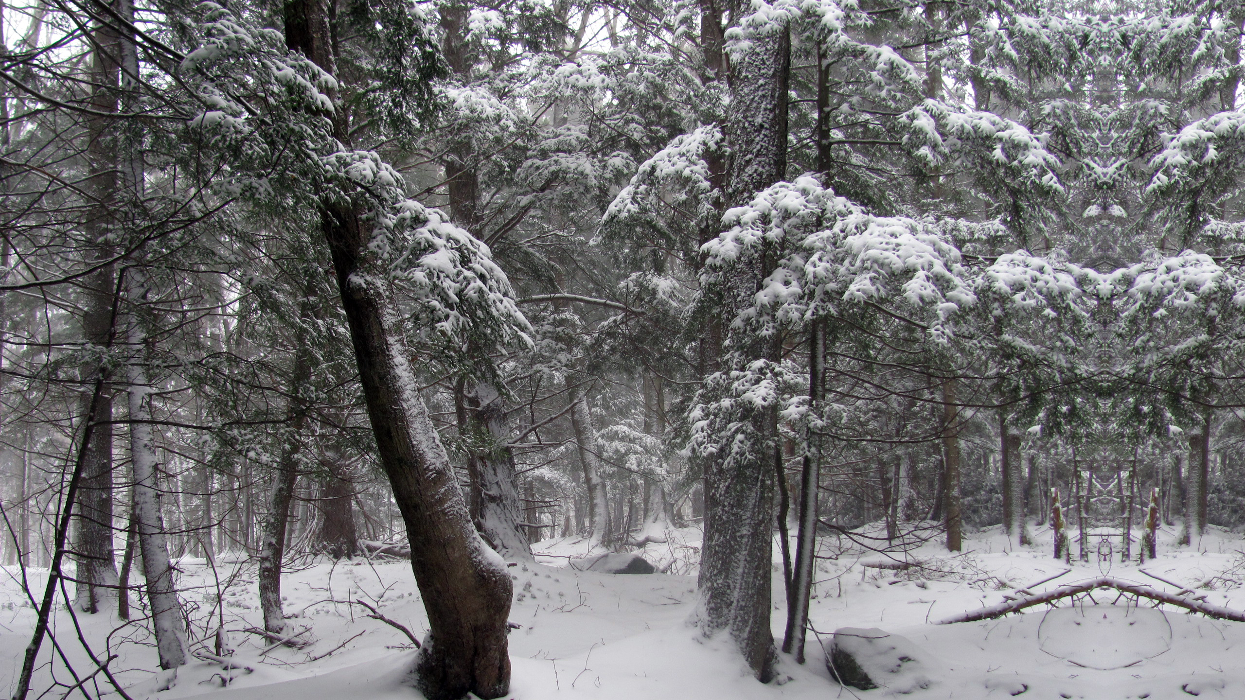 Snow in the woods, Sutton (Quebec)